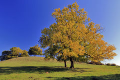 Autumn Ash and Oak Trees Cracks Hill Royalty Free Stock Images