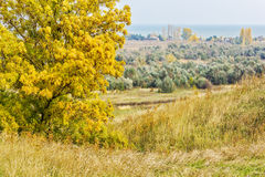 Autumn ash on top of a hill Stock Photo