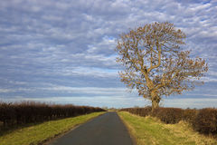 Autumn ash tree Stock Images
