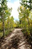 Autumn Aspen Dirt Road Imágenes de archivo libres de regalías