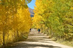 Autumn Aspen Grove Photographie stock