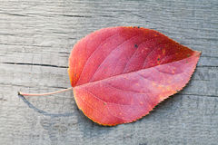 Autumn aspen leaf on the wooden desk. red color and pattern Royalty Free Stock Photography