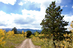 Autumn Aspen Mountain Road. A small mountain dirt road bordered by young aspen trees starting to turn yellow and a ponderosa pine in the mountains of Colorado Royalty Free Stock Photos