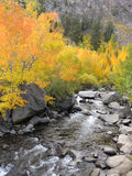 Autumn aspen and mountain stream Royalty Free Stock Photo