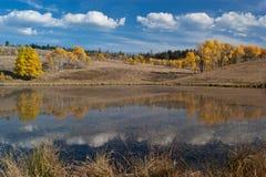 Autumn aspen reflection Royalty Free Stock Photography