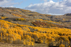 Autumn Aspen Trees Fotografia Stock Libera da Diritti