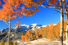 Autumn aspen trees with mount Timpangos. Royalty Free Stock Image