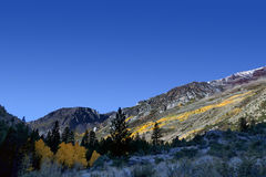 Autumn Aspen Trees and Mountains Royalty Free Stock Images