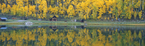 Autumn aspens Stock Photography