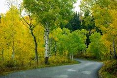 Autumn Aspens Foto de archivo libre de regalías