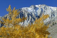 Autumn aspens at a mountain lake Stock Photos