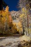 Autumn Aspens Mountain Lane Royalty Free Stock Photos