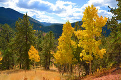 Autumn Aspens in Rocky Mountains Royalty-vrije Stock Foto's