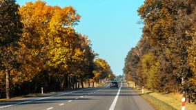 Autumn asphalt road. Background nature Royalty Free Stock Image