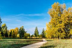 Path with trees in autumn. Autumn trees in the Park royalty free stock photography