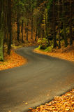 Autumn asphalt road Royalty Free Stock Photo