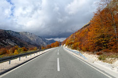 Autumn asphalt road Stock Images