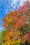 Autumn Assortment Stock Photo