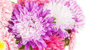 Autumn aster flowers bouquet background Stock Photography