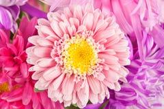 A autumn aster flowers bouquet background Stock Photos