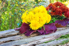 Autumn asters, autumn flower arrangement Royalty Free Stock Photo