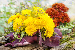 Autumn asters Stock Images