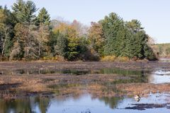 Free Autumn At Leach Pond In Borderland State Park, Easton MA Stock Photos - 114074213