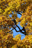 Autumn athosphere. Window to the sky - autumn atmosphere in a parc royalty free stock photography