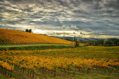 Autumn Atmosphere i en Wineyards i Tuscany, Chianti, Italien arkivbilder