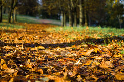 Autumn atmosphere at a leafy alley,Background photo of fall Stock Image