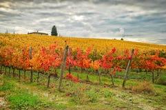 Autumn Atmosphere in un Wineyards in Toscana, Chianti, Italia Immagine Stock