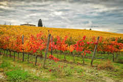 Autumn Atmosphere in a Wineyards in Tuscany, Chianti, Italy. Wineyards in Tuscany, vinegrapes, and leaves vine. Chianti region, in Tuscany, Italy stock image