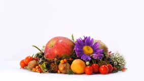 Autumn Attributes Composition video d archivio