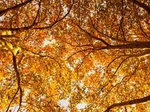 Autumn in Australia. As seen at Carlton, Melbourne Stock Photo
