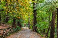 Autumn in Australia - empty footpath Royalty Free Stock Photo