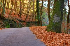 Autumn. Landscape with road and beautiful colored trees, in Geres, portuguese national Park stock photo