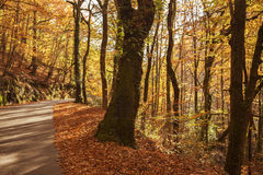 Autumn. Landscape with road and beautiful colored trees, in Geres, portuguese national Park royalty free stock image