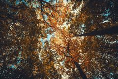 Autumn, Autumn, Leaves, Fall royalty free stock images
