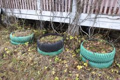 Autumn. Nature and car tires in the form of flower beds Stock Image