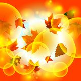 Autumn autumnal background beautiful beauty botany Stock Images