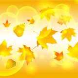 Autumn autumnal background beautiful beauty botany Stock Image