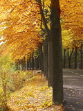 Autumn avenue Royalty Free Stock Photography