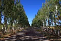 autumn avenue royalty free stock image