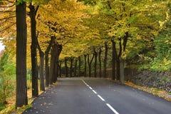 Autumn avenue.  Stock Images