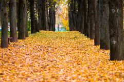 Autumn avenue Royalty Free Stock Photo