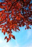 Autumn avenue Stock Photo
