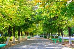 Autumn avenue Stock Photography