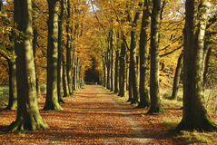 Autumn avenue Stock Images
