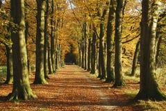 Autumn avenue Stock Images
