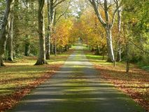 Autumn Avenue. A scenic driveway in Autumn, Europe Stock Image